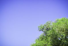 Green tree witn clear blue sky stock images