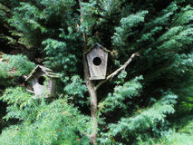 Green tree with wooden bird houses Royalty Free Stock Images