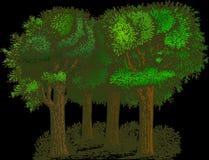 Green, Tree, Woody Plant, Leaf Stock Photos