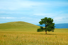 Green tree in yellow field. Blue mountains behind Stock Photos