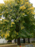 Green tree with zoom effect Royalty Free Stock Images