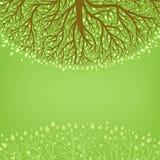 Green treen Arkivbilder