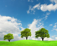 Green trees Stock Photography
