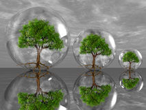 Green trees. The green trees in bubbles Royalty Free Stock Photo