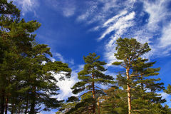 green trees royaltyfria foton