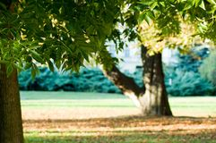 Green trees. Trees in park around the chateau Royalty Free Stock Photo