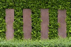 Green trees adorn the walls and patterned fences. In the garden royalty free stock image