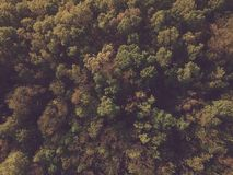 Green Trees Aerial Shot Royalty Free Stock Photography