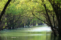 Green trees against the river Stock Photography