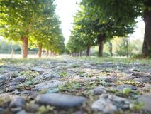 Tree Alley with a path. Green trees along a path in Germany, Cologne royalty free stock image