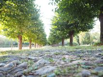 Tree Alley with a path. Green trees along a path in Germany, Cologne royalty free stock images