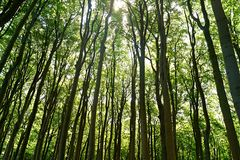 Green trees in the amazing forest royalty free stock photography