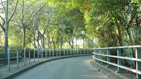 Green trees around the road at daytime. Green trees and plants around the road at daytime Stock Images
