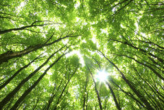 Green trees background Royalty Free Stock Photos