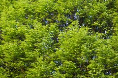 Green trees background Stock Photo