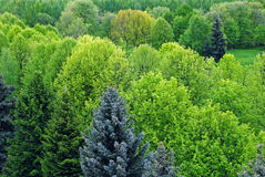 Green trees background Stock Photos
