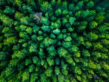 Green trees background in Lithuania, Europe stock photo