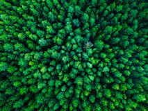 Green trees background in Lithuania, Europe royalty free stock photo