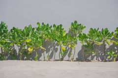 Green trees on the beach. Stock Images
