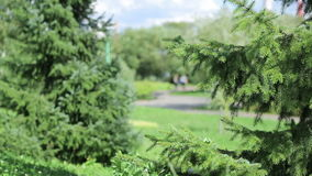 Green trees. A beautiful lawn in the sunshine day in park stock footage