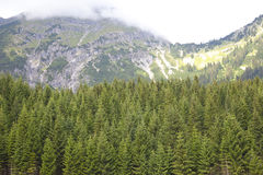 Green trees with beautiful mountains near Berwang Stock Image