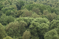 Green trees. Big green trees of mixed forest  in the middle lane Royalty Free Stock Images
