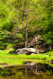 Green trees with big stones and lake Royalty Free Stock Photos