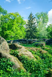 Green trees with big stones Stock Image