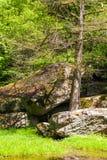 Green trees with big stones Stock Photo