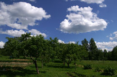 Green trees and blue sky background Royalty Free Stock Photo
