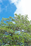 Green trees and blue sky. Background royalty free stock photo