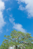 Green trees and blue sky. With big white clouds stock images