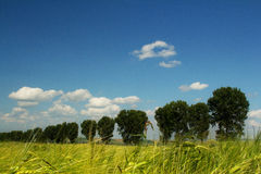 Green trees and blue sky Stock Image