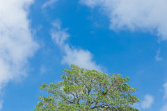 Green trees and blue sky. With white cloud Royalty Free Stock Photos