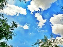 green trees with blue sky and white clouds in summer Stock Photo