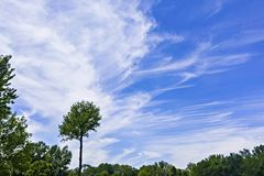 Green trees and blue sky with wispy cirrus clouds Stock Photography