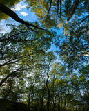 Green Trees Canopy Royalty Free Stock Photography