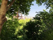 Green trees in the city surroundings. summer time day.  Stock Photos