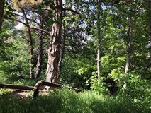 Green trees in the city surroundings. summer time day.  Royalty Free Stock Photo