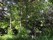Green trees in the city surroundings. summer time day.  Royalty Free Stock Photography
