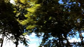 Green trees and cloud motion. Window view from car stock video