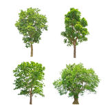 Green trees collection isolated Stock Photo