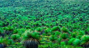 Green  grass trees in country forest Royalty Free Stock Images