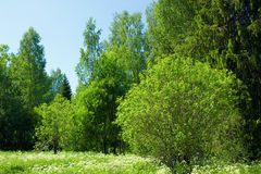 Green trees in countryside Stock Photo