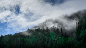 Green Trees Covered With Fog Stock Images