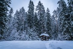 Green Trees Covered by Snow Royalty Free Stock Photo