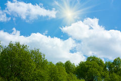 Green Trees and Cumulus Clouds of Blue Sky Stock Photography