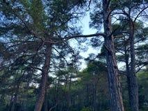 Green Trees at Daytime stock photos