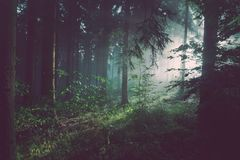Green Trees during Daytime Royalty Free Stock Photography