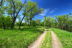 Green trees and dirt road Stock Images